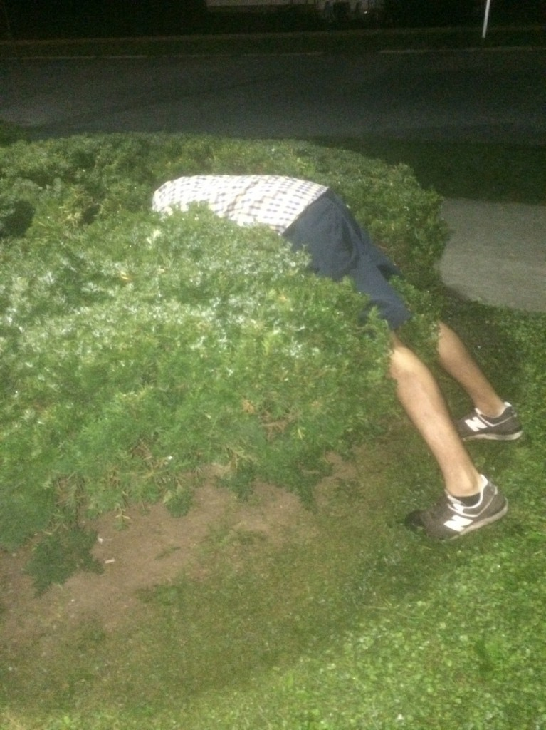 """This'll do."" *faceplants into bush*"