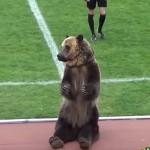 russian bear soccer game