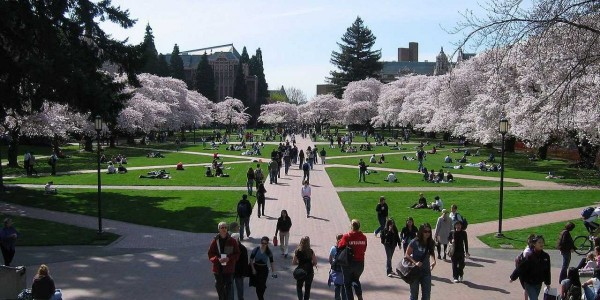 university-washington-quad-campus-cherry-trees