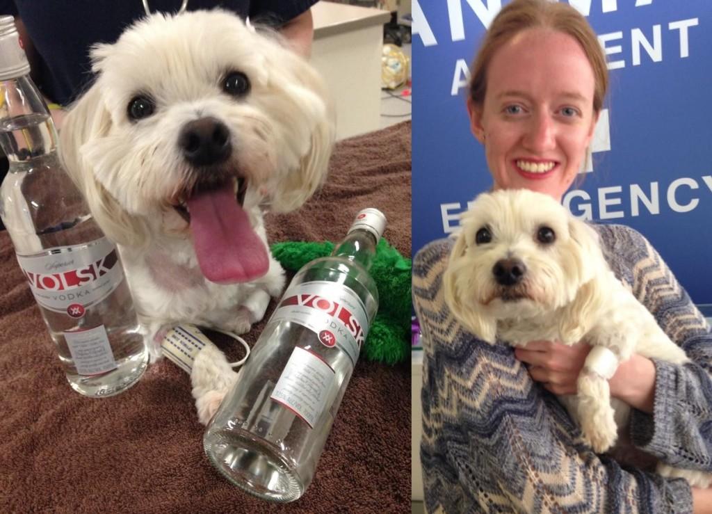 aae-charlie-vodka
