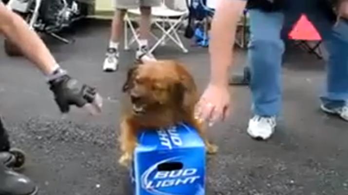 beerdog